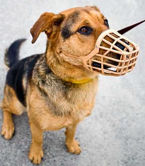 Image Result For Can Neutered Dogs